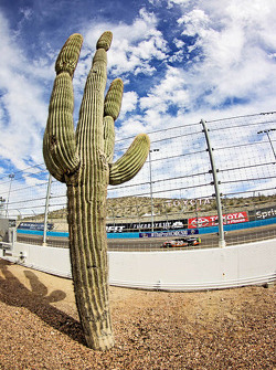 Giant trackside cactus