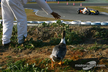 Nelson A. Piquet, Test Driver, Renault F1 Team, R27 and a feathered spectator
