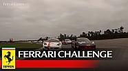 Ferrari Challenge North America - NOLA Motorsport Park 2015: Race 2