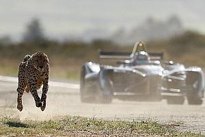 Fórmula E Conteúdo especial VÍDEO: Guepardo aposta corrida com carro da F-E