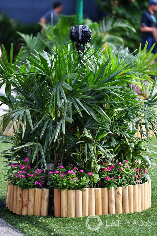Kamera in einer Pflanze