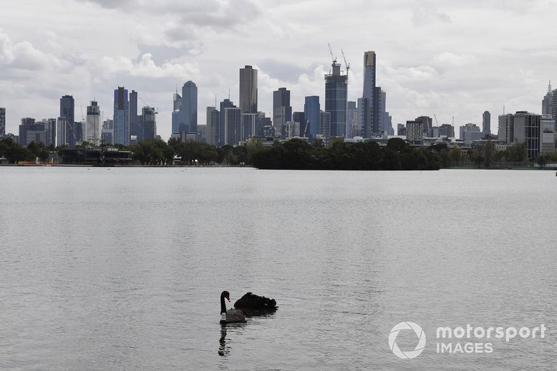 Birds in the Albert Park lake, in front of the Melbourne skyline