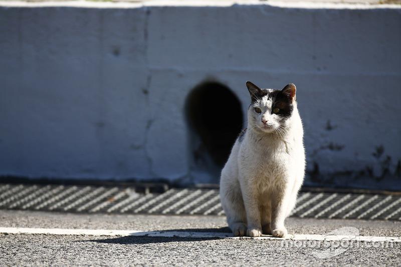 Кот на пит-лейне