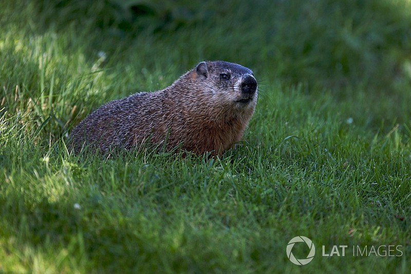 FIA explica incidente com marmota no Canadá