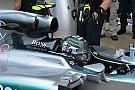 Mercedes: ci sono due orecchie sul cofano motore