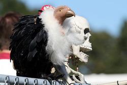 Fans vulture and skeleton
