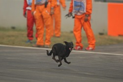 A dog on the circuit