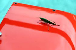 Pitte büyük bir böcek