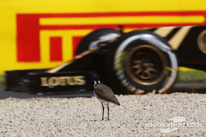 一只鸟看着帕斯托·马尔多纳多,路特斯F1车队的E23赛车驶过