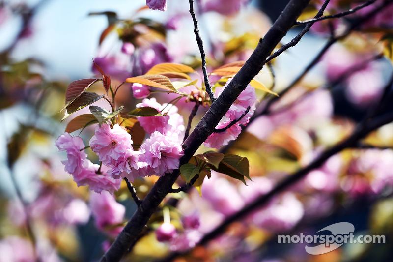 Bunga mekar di pohon di paddock