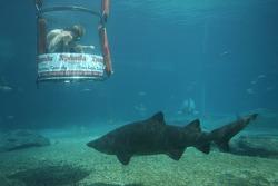 Karl Reindler at the Ushaka Marine World Shark tank
