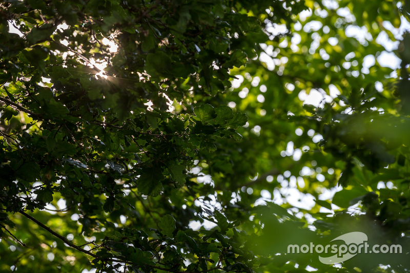 French forest light before Thursday qualifying