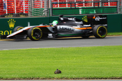 Nico Hulkenberg, Sahara Force India F1 VJM09 passes a duck